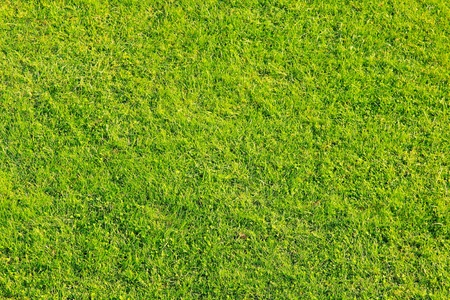 Texture of green grass for football field  photo