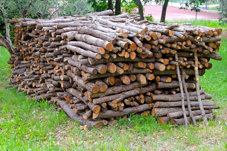 logwood: Big pile of cut fire wood logs