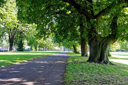 hyde: Way trough woods in London Hyde Park