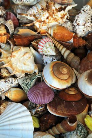 Big pile of colorful decorative sea shells