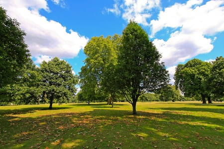 timberland: Sunny summer afternoon in London Hyde Park Stock Photo