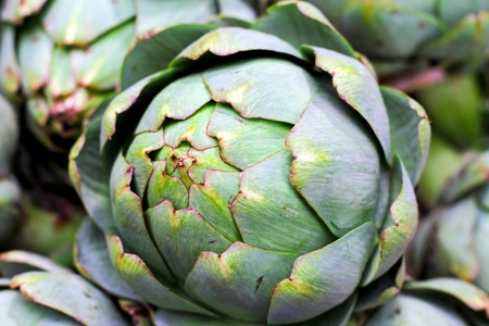 grown: Big pile of freshly grown organic artichokes  Stock Photo