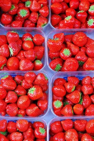 organically: Big piles of fresh organically grown strawberries
