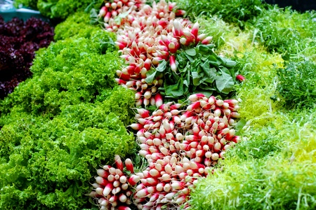 Big assortment of fresh organically grown salads  photo