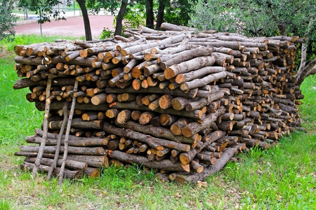 logwood: Big bunch of cut fire wood logs