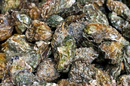ostra: Pila de conchas de las ostras cerradas reci�n descubiertos  Foto de archivo