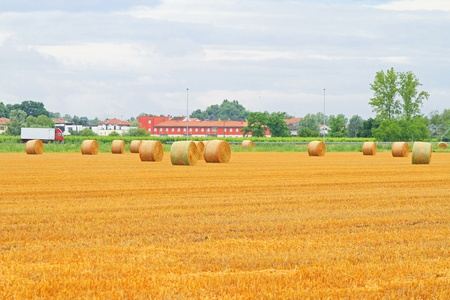 Rolling haystacks in the yellow agriculture field photo