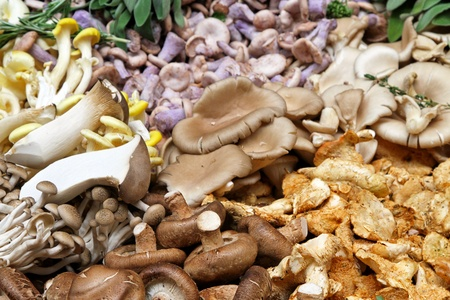 Large selction of edible mushrooms on market stall Stock Photo - 10441740