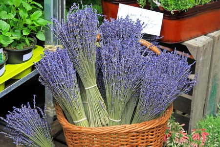 Fresh and decorative purple lavander in basket