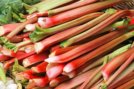 Big pile of organically grown rhubarb vegetable photo