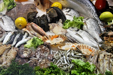 molluscs: Seafood fish and shells variety in display