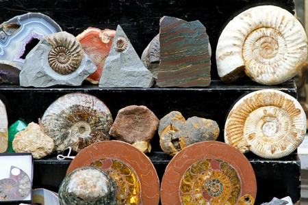 archaeology: Petrified remains of stones and animals display