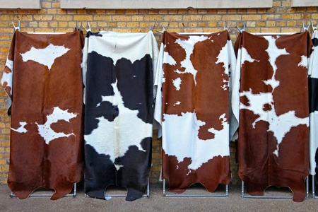 hide: Four unique cowhide at display Stock Photo