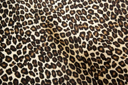 Safari style leopard hide pattern photo