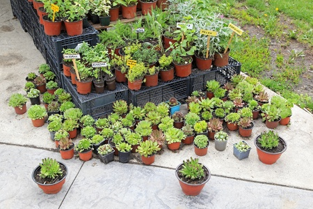 Natural edible plants and herbs in pots Stock Photo - 20471821