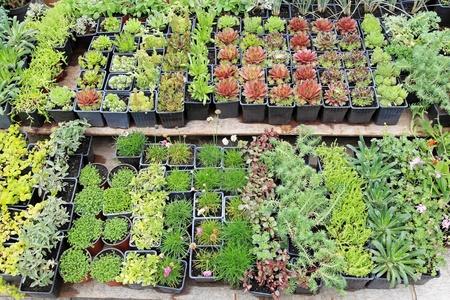 Decorative green plants and seedlings nursery garden Stock Photo - 20471737