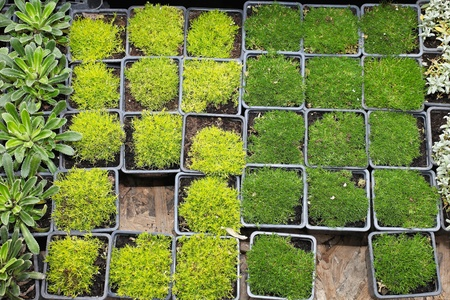 Decorative green plants and seedlings nursery garden Stock Photo - 20471789