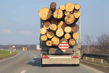 lumber industry: Timber lorry carry wooden logs at road Stock Photo