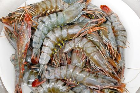 crustaceans: Big pile of fresh seafood crustaceans shrimps Stock Photo
