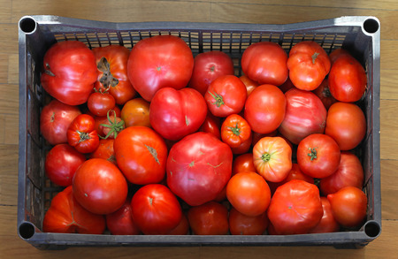 organically: Various size of organically grown tomato in crate
