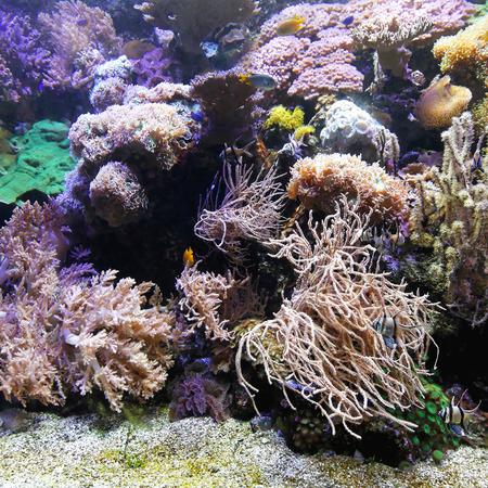 polyp corals: Tropical coral reef in salt water aquarium Stock Photo