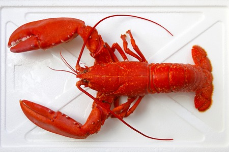 clawed: Cooked orange lobster with big claws Stock Photo