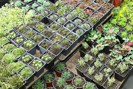 Green plants and seedlings in nursery garden photo