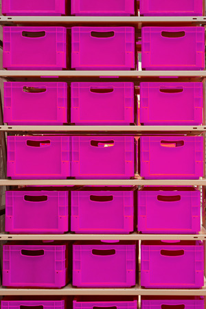 storage box: Shelf with pink plastic crates in warehouse