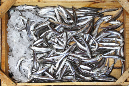 Small anchovy fishes in crate from Mediterranean sea