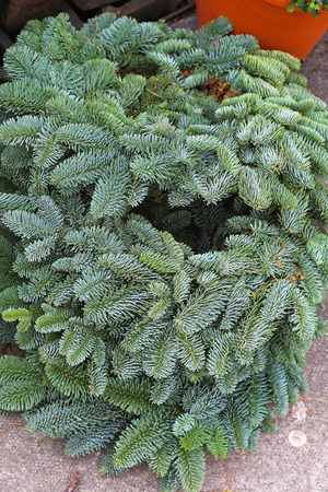 pine wreaths: Bunch of natural pine tree wreaths
