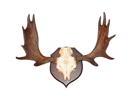 huge antlers: Deer antlers trophy