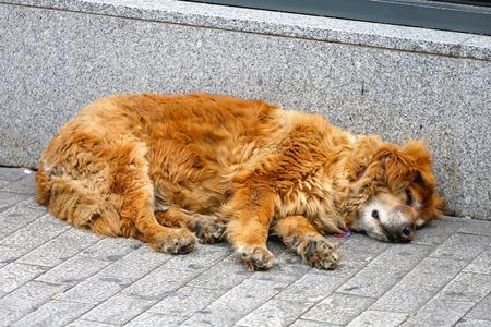 stray dog: Stray dog sleeping at street pavement