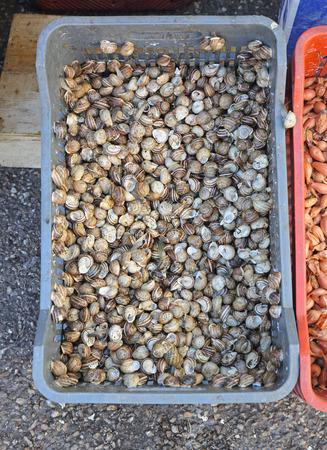 manjar: Pequeños caracoles comestibles Alive en embalaje Francés Delicadeza de cocina
