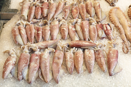 squids: Bunch of Squids on Ice at Fish Market