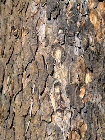 cortex: Cortex on a tree stem
