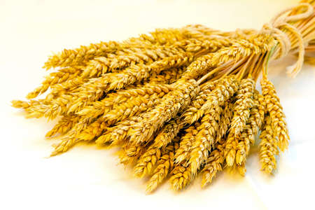 durum: Gros plan d'un faisceau de bl� frais