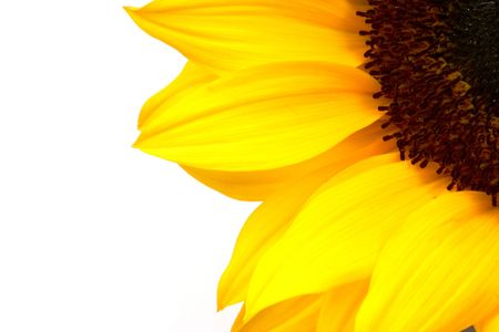 compostion: Cropped view of a sunflower in a corner of the compostion.