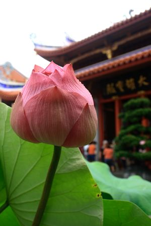 A lotus with water drops. Background is a Chinese temple. photo