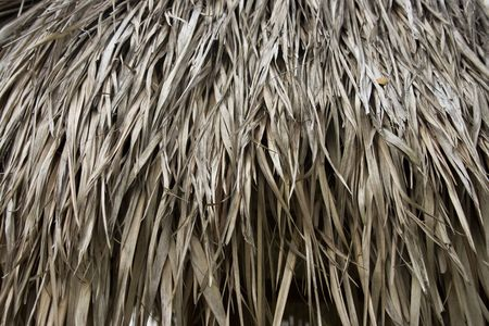which: Texture of Atap leaf, which always use as roof in old village at Asia.