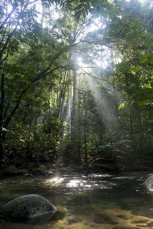 Rainforest with sun rays and flare. Stock Photo - 4253711