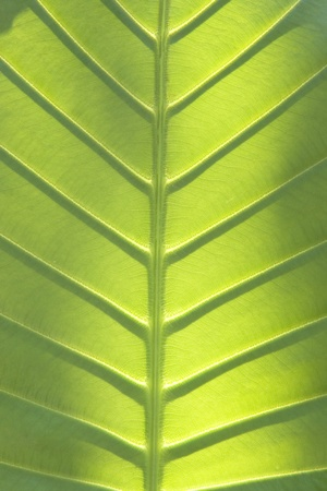 Close up of green leaf texture  Stock Photo