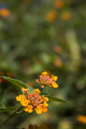 A view of yellow wild flower found in a field.