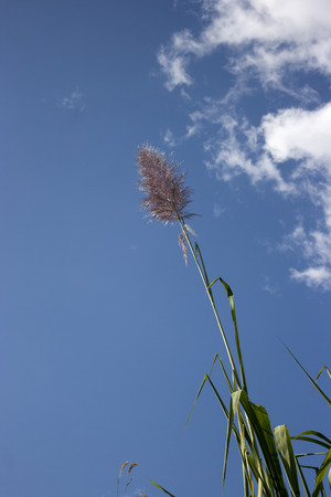 Grass and sky which can use as background in design.