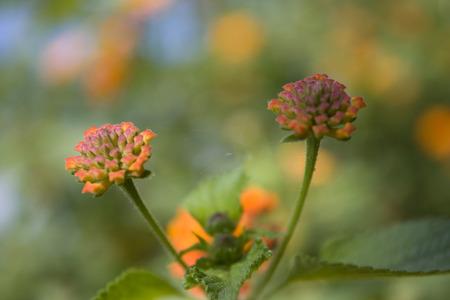 A view of orange wild flower found in a field.