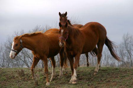 se: Horses 1 - SE Iowa