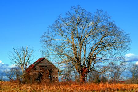 Old weathered barn beside an old tree against a blues sky with fluffy rain clouds photo