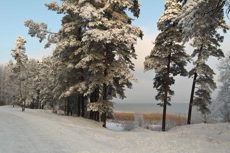 Téli Lettországban Stock fotó