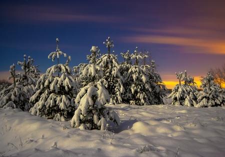 Téli táj. Éjszakai felvétel. December 31, 2009.