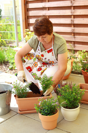 Elderly woman planting flowers and herbs photo