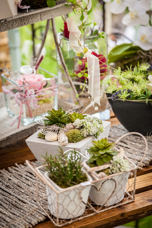 wil: Garden decoration with wildflowers and succulents in shabby chic style